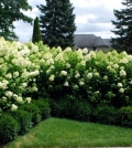 spring-court-cut-bushes-shrubs-and-hedges-in-spring-0-916