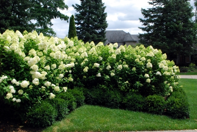 Most Plants Need A Good Cut And Care The Trick Is Knowing What When To If You Are Unsure Of Bushes Shrubs Hedges Be In Spring