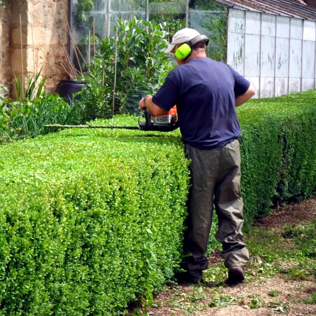 Spring Court - cut bushes, shrubs and hedges in spring