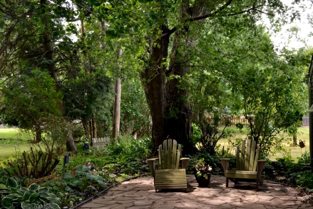 A tree for the garden - the perfect accent in the garden