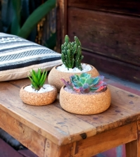 pots-cork-ideal-for-cactus-and-succulents-0-958