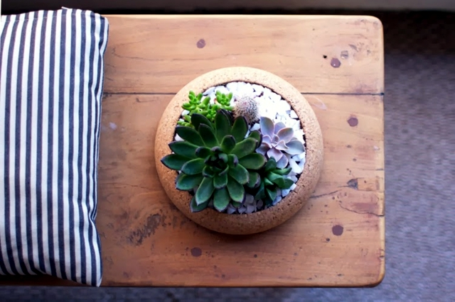 Pots Cork - ideal for cactus and succulents