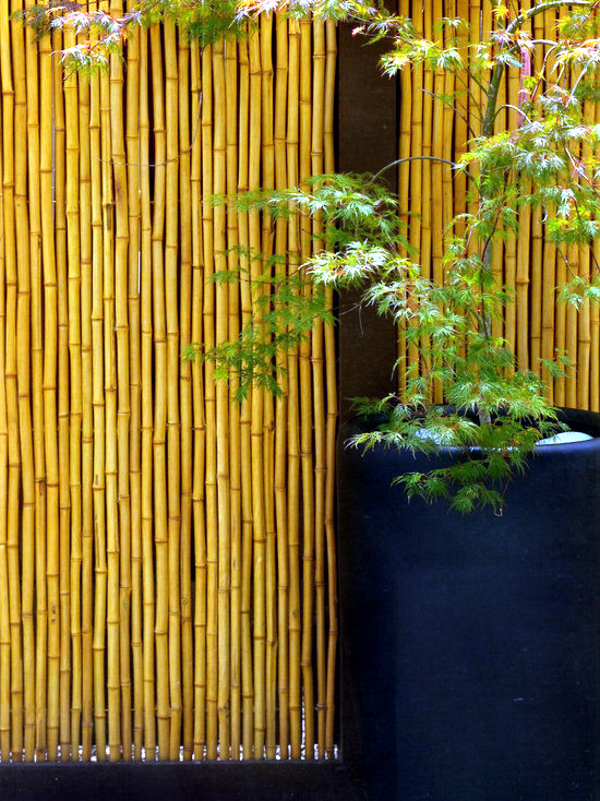 56 ideas for bamboo in the garden – out of sight or ...