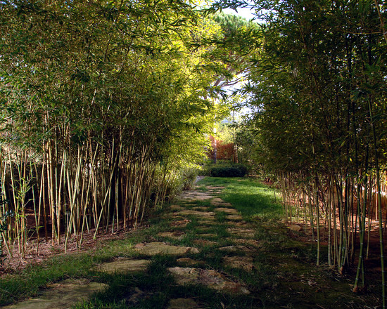 56 ideas for bamboo in the garden - out of sight or decoration?