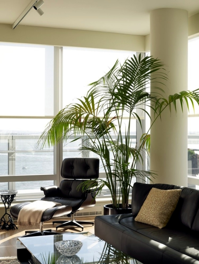 Benefits Of Indoor Plants   Why Are They So Important To Our House