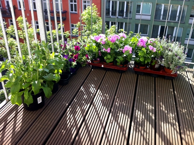 Spring is planting time - What is the plant flowers in planters?