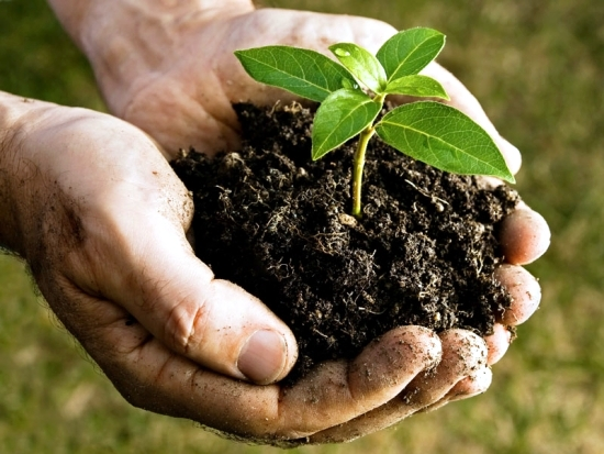 10 nütlzliche and practical tips on how you can live green