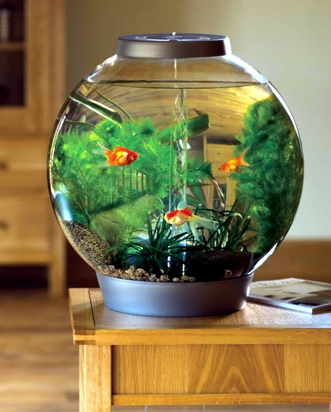 100 ideas integrate aquarium designs in the wall or in the for Small fish tank ideas