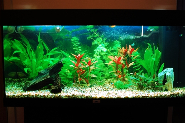 100 ideas integrate aquarium designs in the wall or in the living room ...