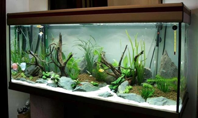 100 ideas integrate aquarium designs in the wall or in the. Black Bedroom Furniture Sets. Home Design Ideas