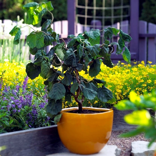 15 flowers and plants for balcony small garden or roof for Plants for small gardens