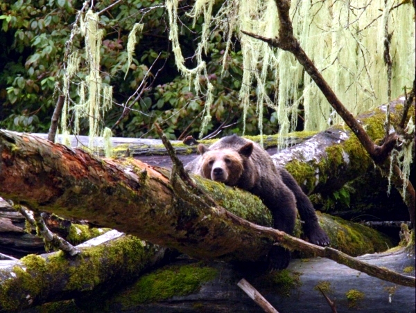 20 ideas for adventure trips for animal lovers - the adventure of a lifetime