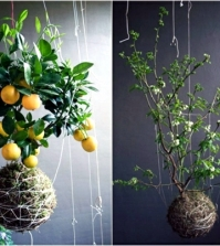 20-ideas-for-hanging-flower-pots-indoor-plants-exhibit-creative-0-76169297