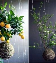 20-ideas-for-hanging-flower-pots-indoor-plants-exhibit-creative-0-76169297