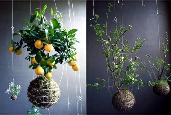 20 ideas for hanging flower pots indoor plants exhibit for Indoor flower design