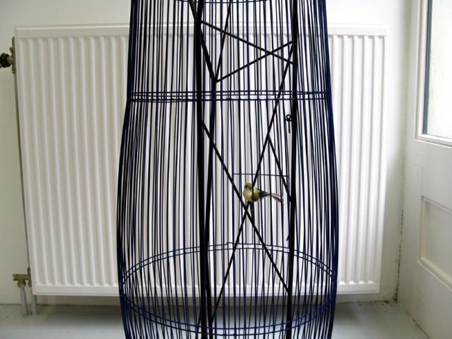 Aquarium and bird in a cage design - the concept duplex