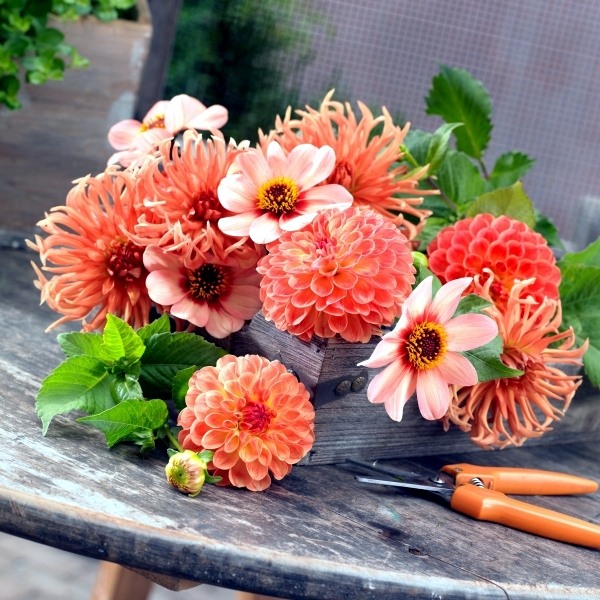 Autumn garden flowers - orange and red shades for the summer final