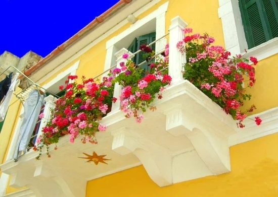 Beautiful ideas with balcony plants – decorate the patio