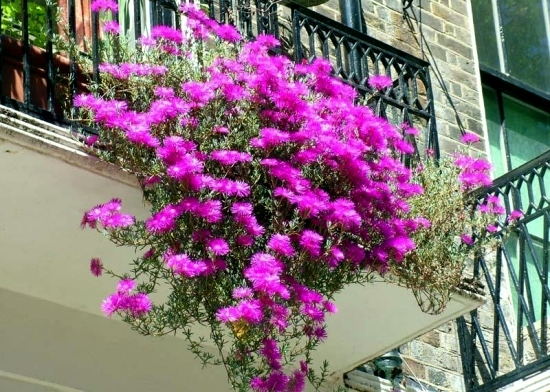 Beautiful ideas with balcony plants - decorate the patio with flowers
