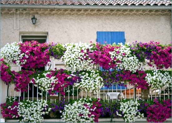 Beautiful ideas with balcony plants decorate the patio for How to decorate terrace with plants