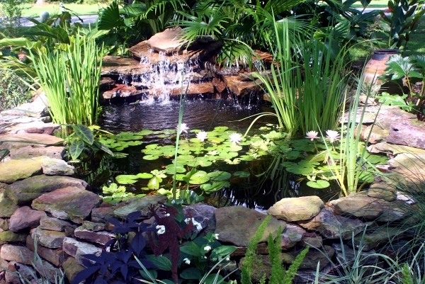 Build garden pond a water garden design options for Koi pond size requirements