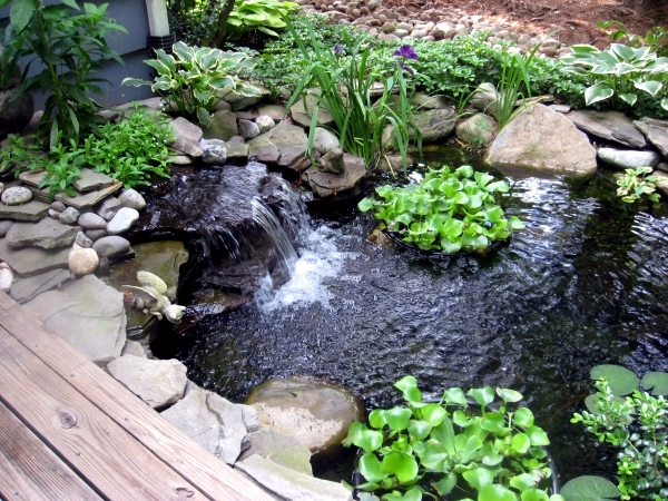 Build garden pond a water garden design options for Making ponds for a garden