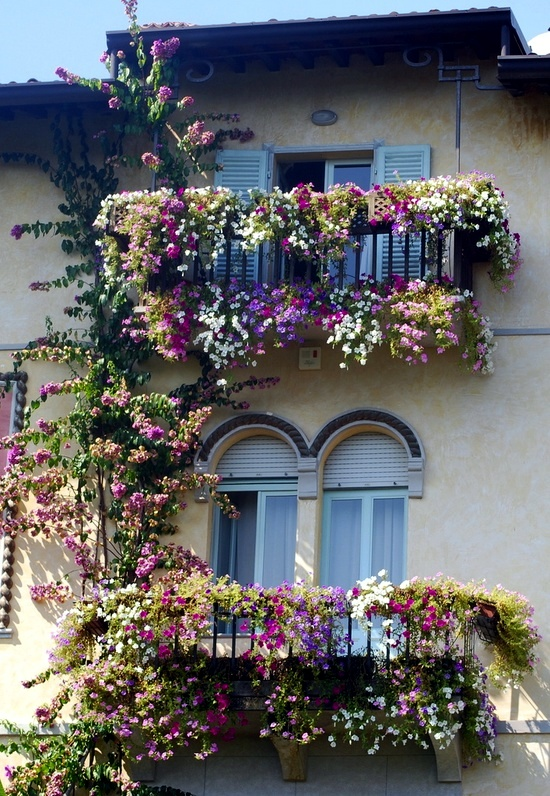 Climbing plants on balconies and terraces screening and for Balcony flowers