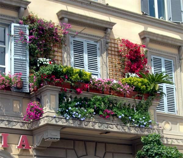 Climbing plants on balconies and terraces screening and greening interior design ideas - English style window boxes living facades ...
