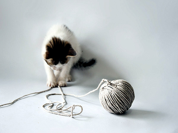 Cool design objects for cats and people of Laia Fusté