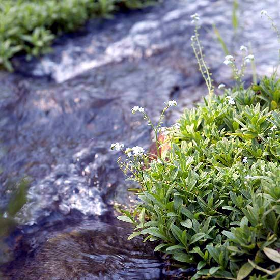 Creating a garden pond new tips for successful water for Garden pond advice