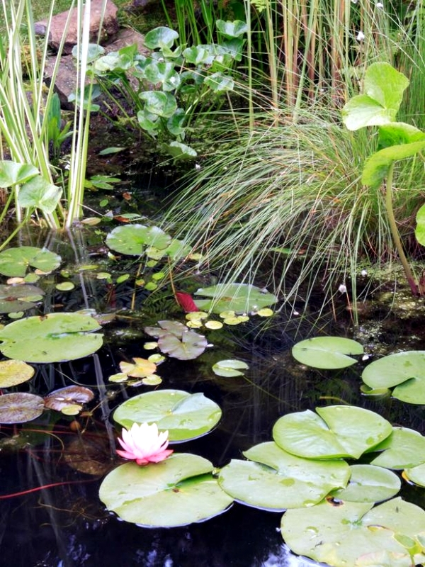 Creating A Garden Pond The Heart Of An Attractive Water