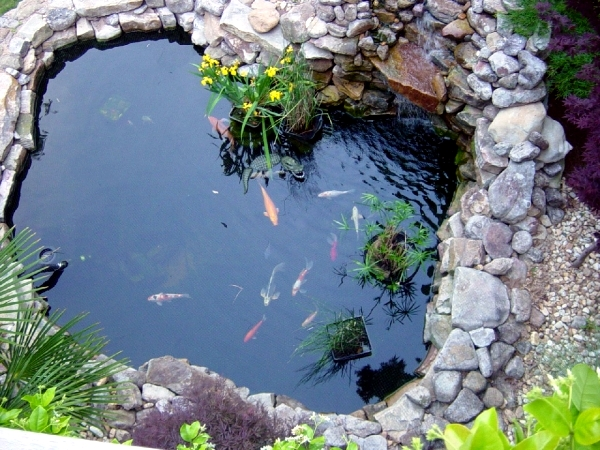 Creating a garden pond - the heart of an attractive water garden