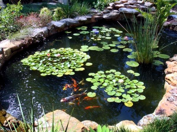 Creating a garden pond - the heart of an attractive water garden