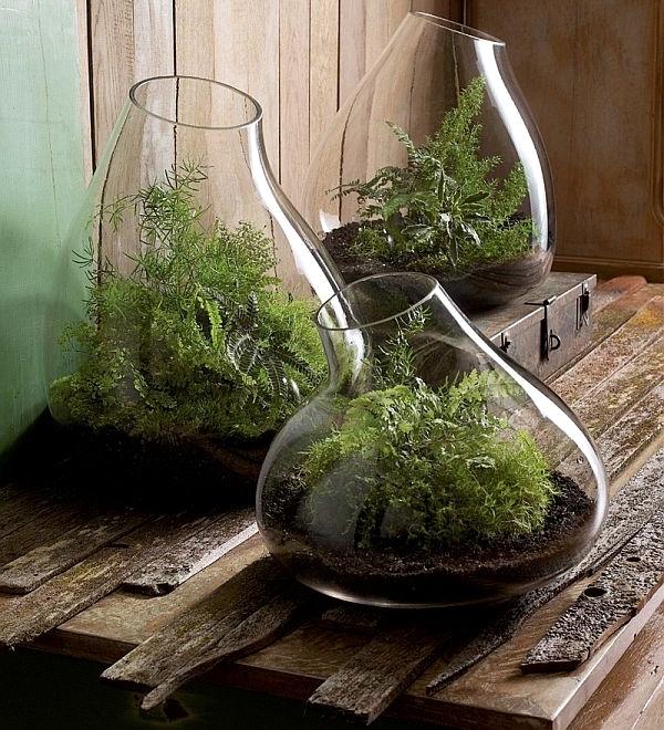 Fast terrarium instructions - put on a mini garden!