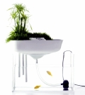 floating-mini-garden-serves-as-a-natural-filter-for-the-aquarium-0-1053551827