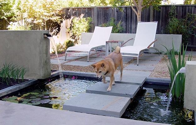 Garden Design For Dogs fun for dogs in the garden – tips for pet-friendly garden design
