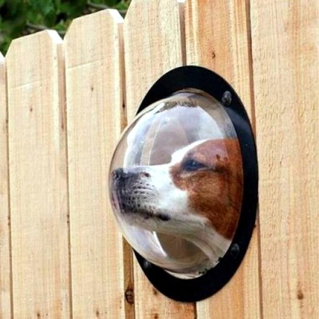 Fun for dogs in the garden Tips for pet friendly garden design