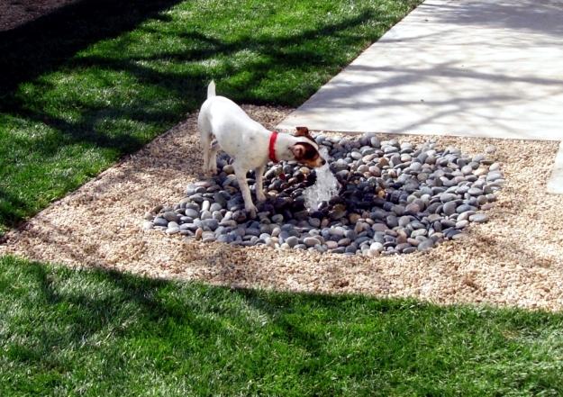 Fun for dogs in the garden - Tips for pet-friendly garden design