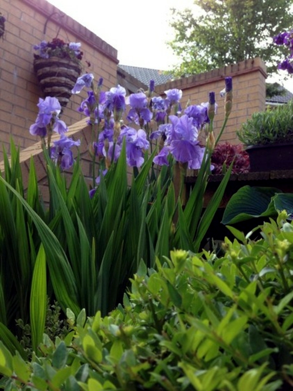 Gardening like the pros - Trends in Horticulture