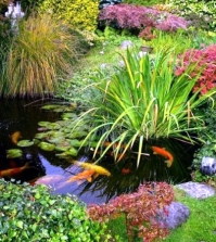 koi-pond-in-the-garden-tips-on-how-to-select-the-fish-pond-and-breed-0-681947064