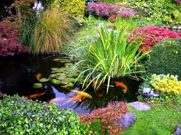 Koi pond in the garden Tips on How to select the fish pond and