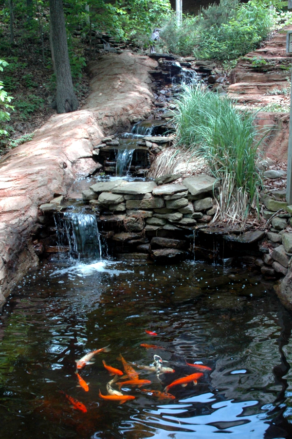 Koi pond in the garden - Tips on How to select the fish pond and breed