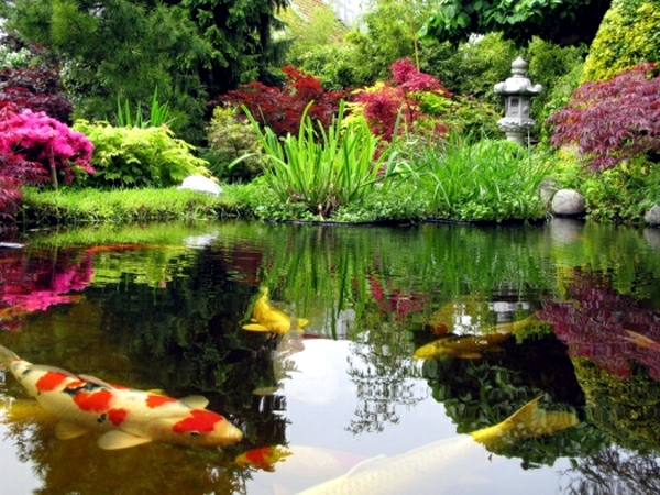 Koi Pond In The Garden Tips On How To Select The Fish