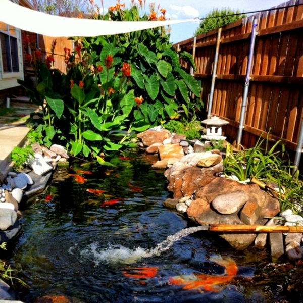 Koi pond in the garden tips on how to select the fish for Landscaping around koi pond