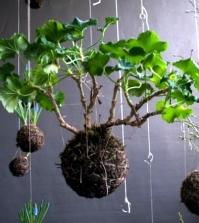 make-moss-balls-to-hang-himself-decoration-with-flowers-and-potted-plants-0-777675200