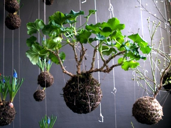 Make Moss To Hang Himself Decoration With Flowers