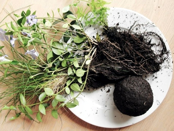 Make moss balls to hang himself - decoration with flowers and potted plants
