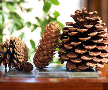 Pine cone decoration craft and decorating the house full of atmosphere