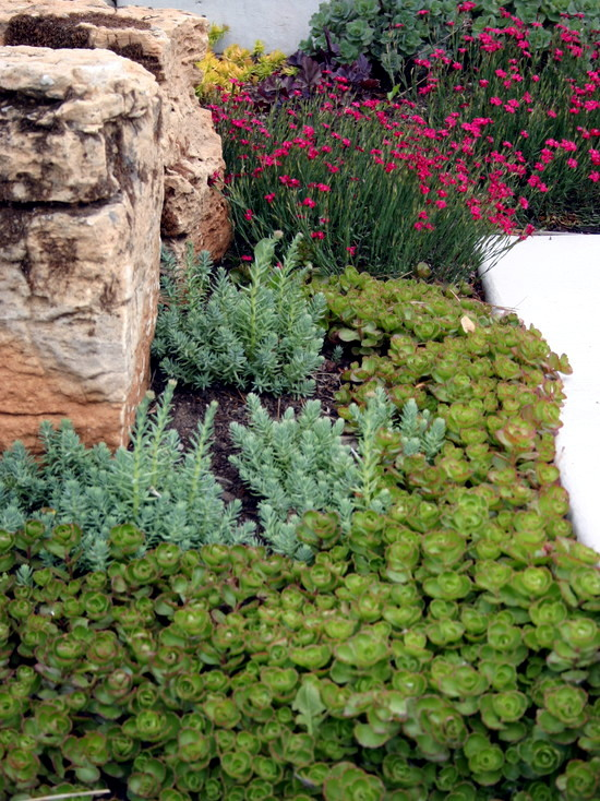 Planting Ideas And Tips For Narrow Planting Strips In The