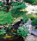 pond-in-the-backyard-using-five-useful-tips-to-create-0-92884267